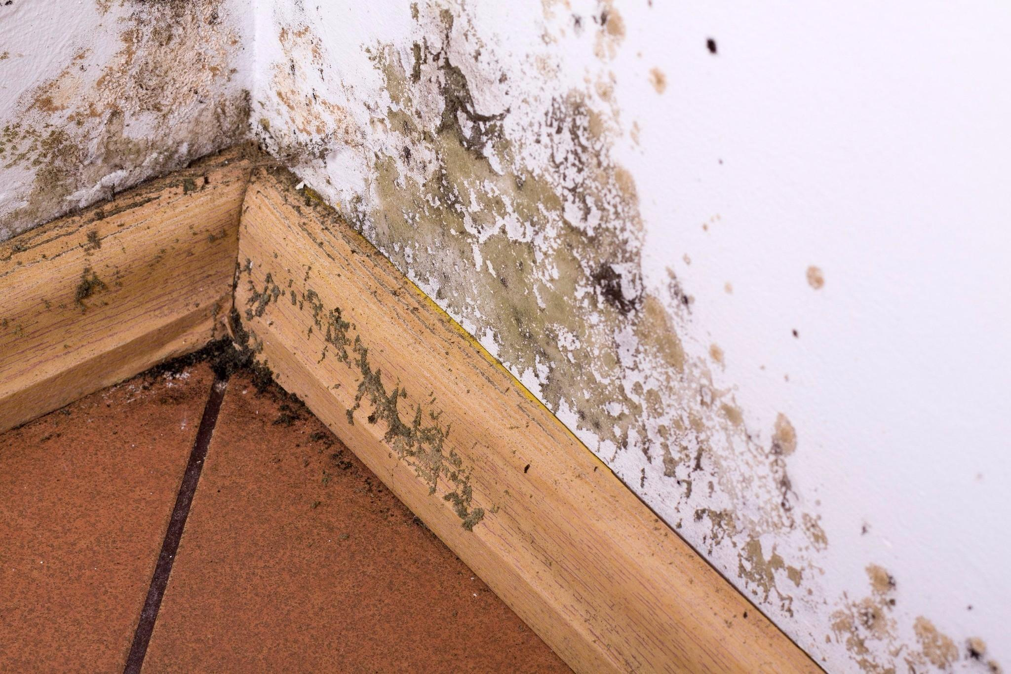 mold-removal-experts